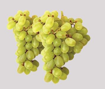Chasselsas Golden Grape