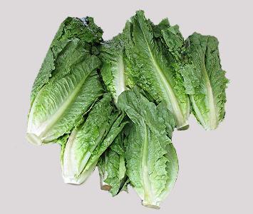 Cos Lettuce
