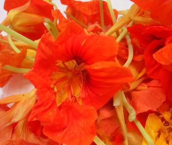 Nastarium Flower