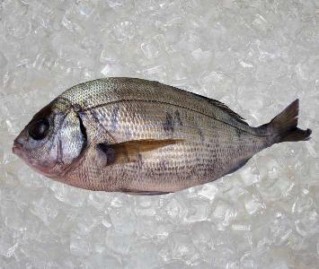 Royal Sea Bream