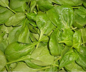 Spinach - young Salad