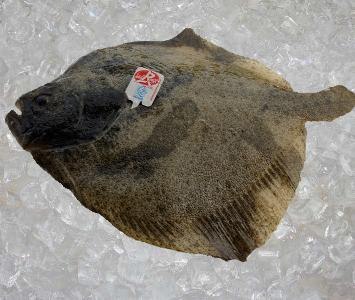 Turbot Label Rouge